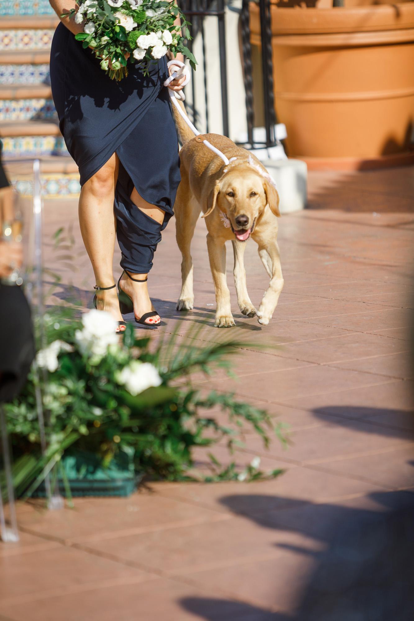 www.santabarbarawedding.com | Kiel Rucker | Canary Hotel | Dog