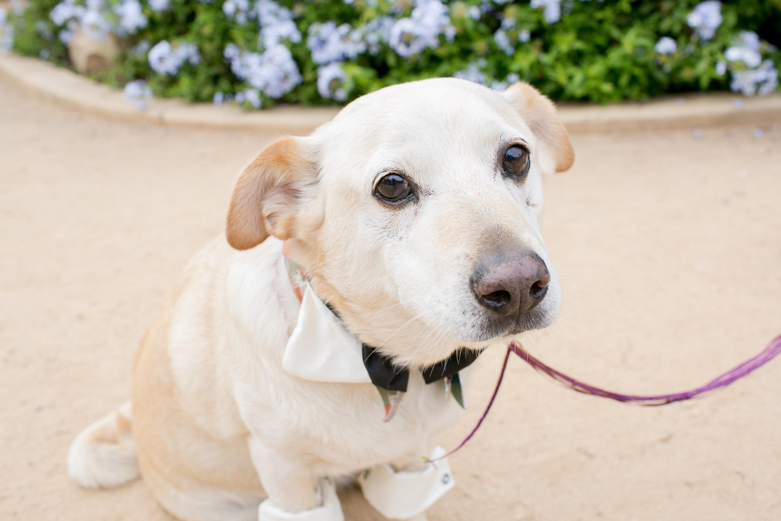 www.santabarbarawedding.com | Kelsey Crews | Felici Events | Alice Keck Park | Dog