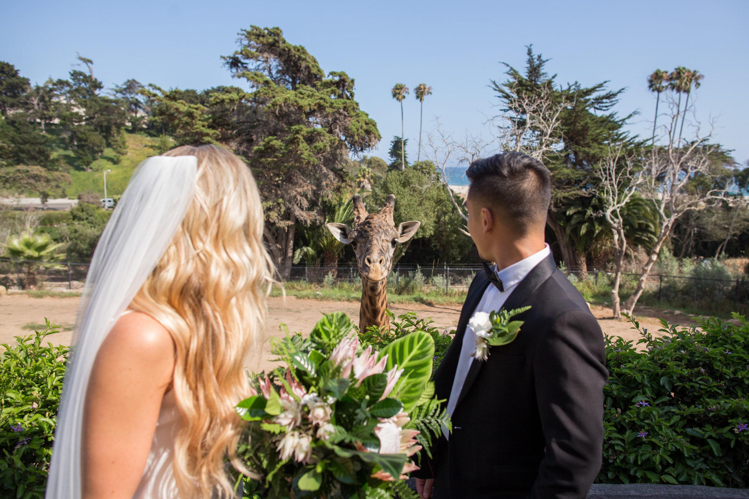 www.santabarbarawedding.com   Santa Barbara Zoo   Wonder Tribe   Events by Rincon   Bride and Groom and Giraffe