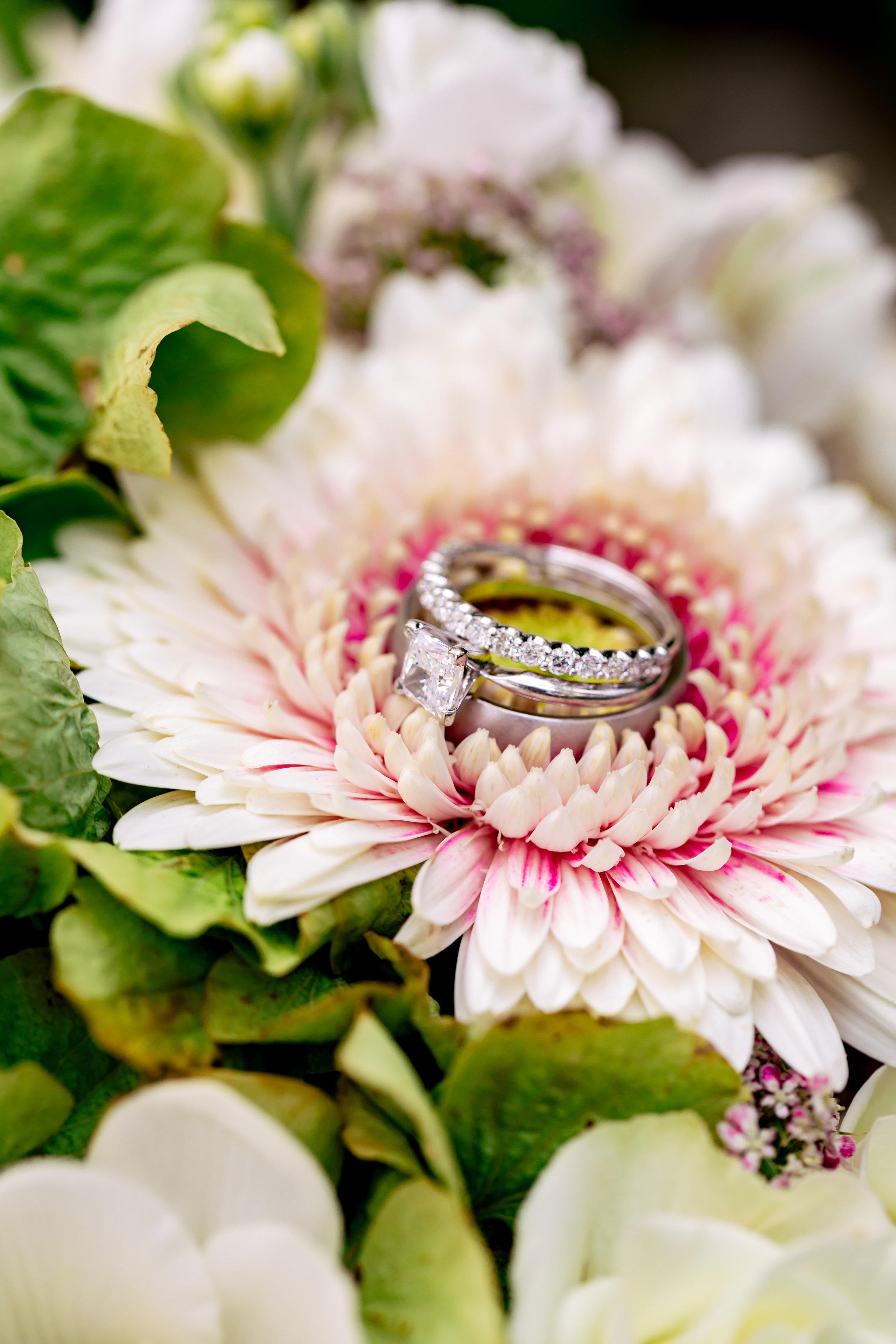 www.santabarbarawedding.com   Rewind Photography   Santa Barbara Courthouse   Elopement   Wedding Rings
