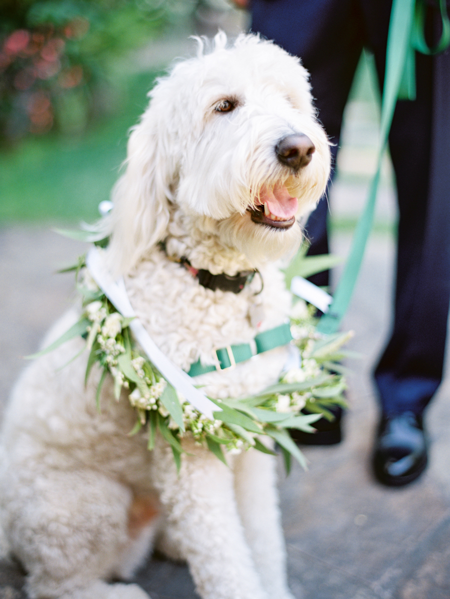 www.santabarbarawedding.com | Michael + Anna Costa Photography | Butterfly Lane Estate | Soigne Productions | Tricia Fountaine Designs | Dog with Flowers
