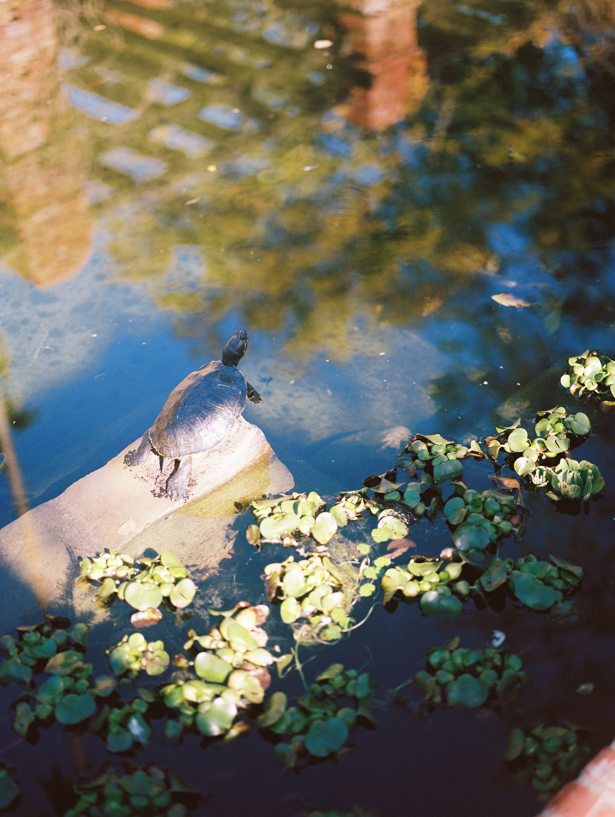 www.santabarbarawedding.com | Ryanne Bee Photography | Santa Barbara Courthouse | Belmond El Encanto | Turtle on the Water
