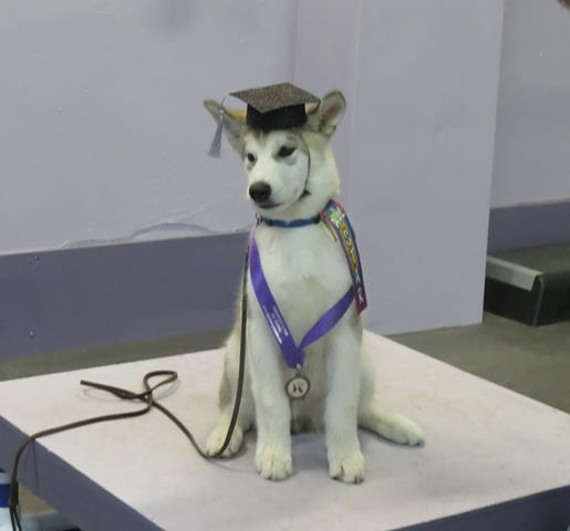 """He is looking very much the part of """"graduate"""""""