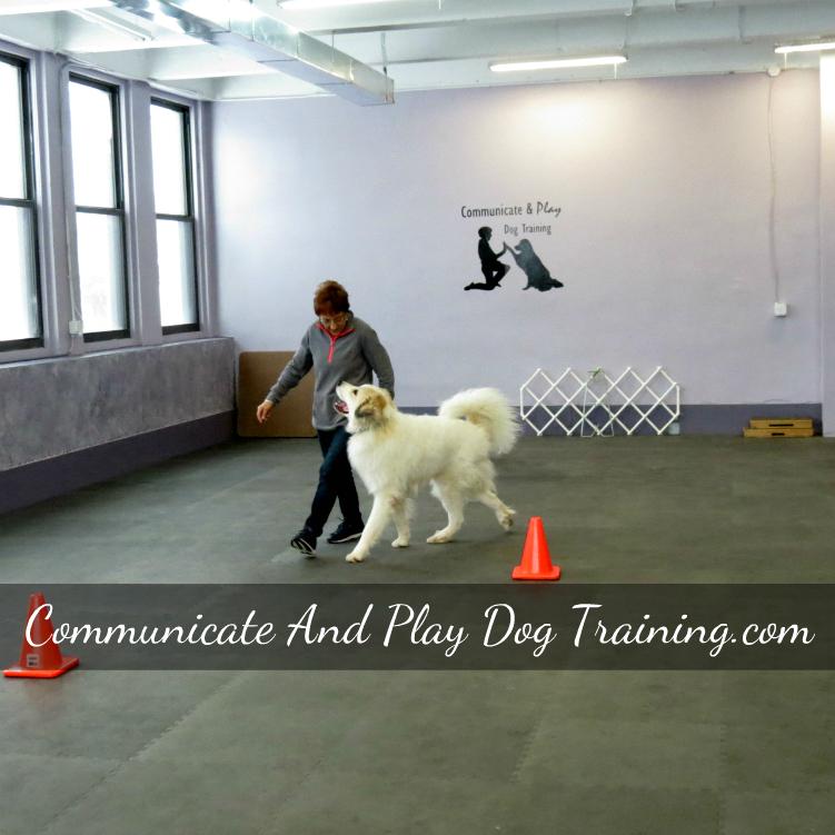 Western-New-York-Competiton-Dog-Training.jpg