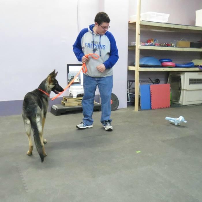 Hamburg_New_York_Dog_Training1