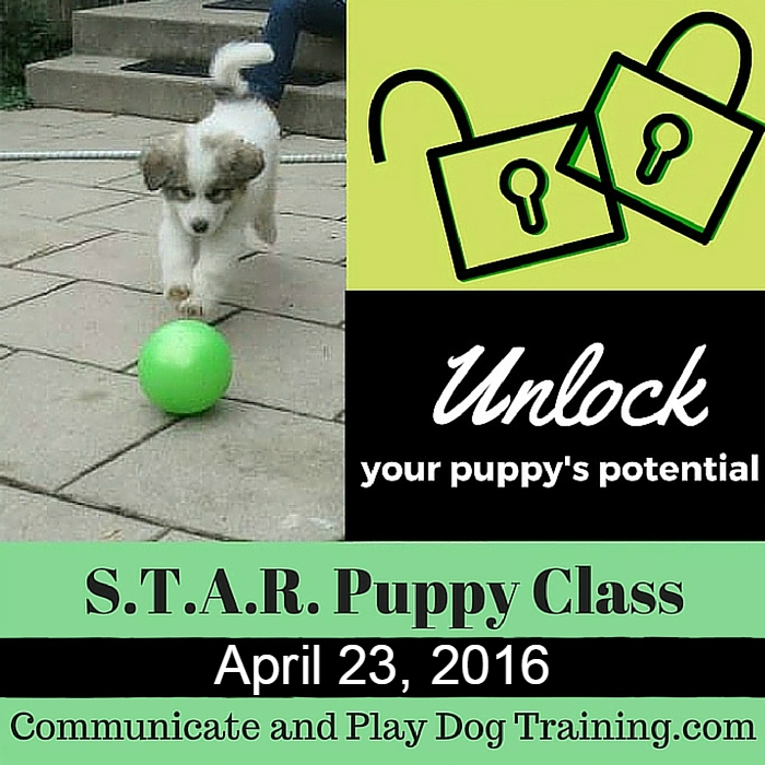 Puppy_Class_Western_New_York April 23