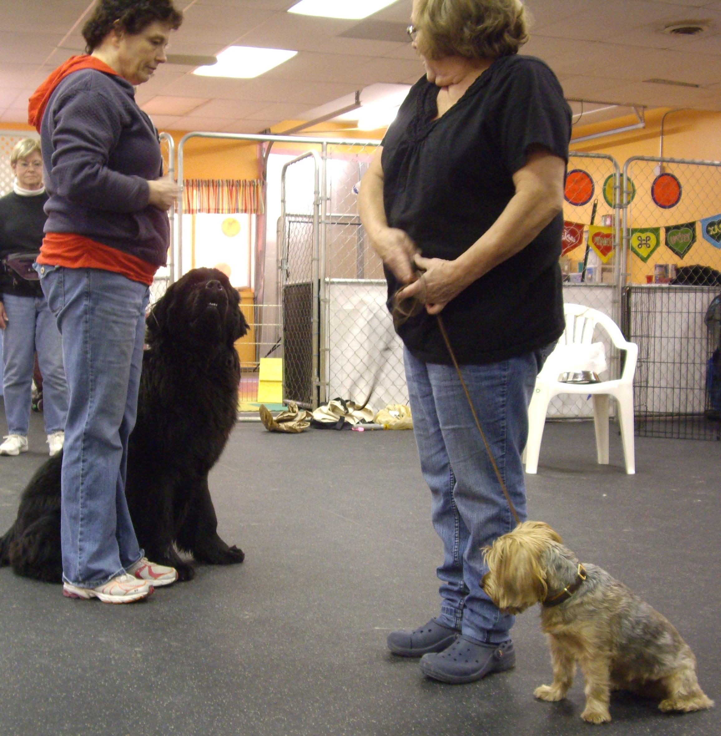 Friendly dog greeting