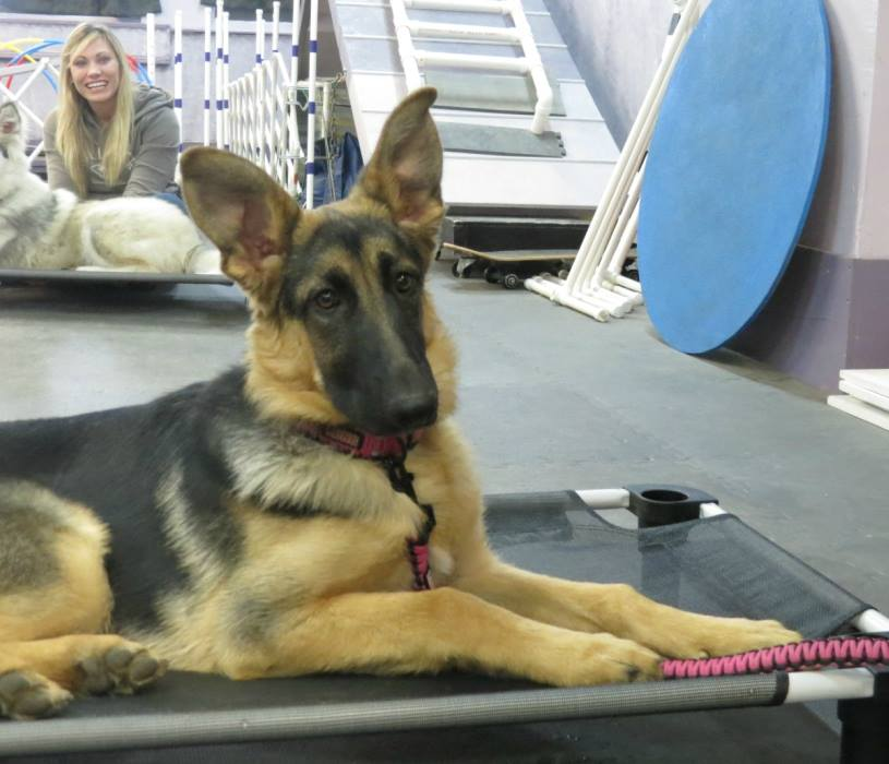 Dog_Training_Hamburg_New_York