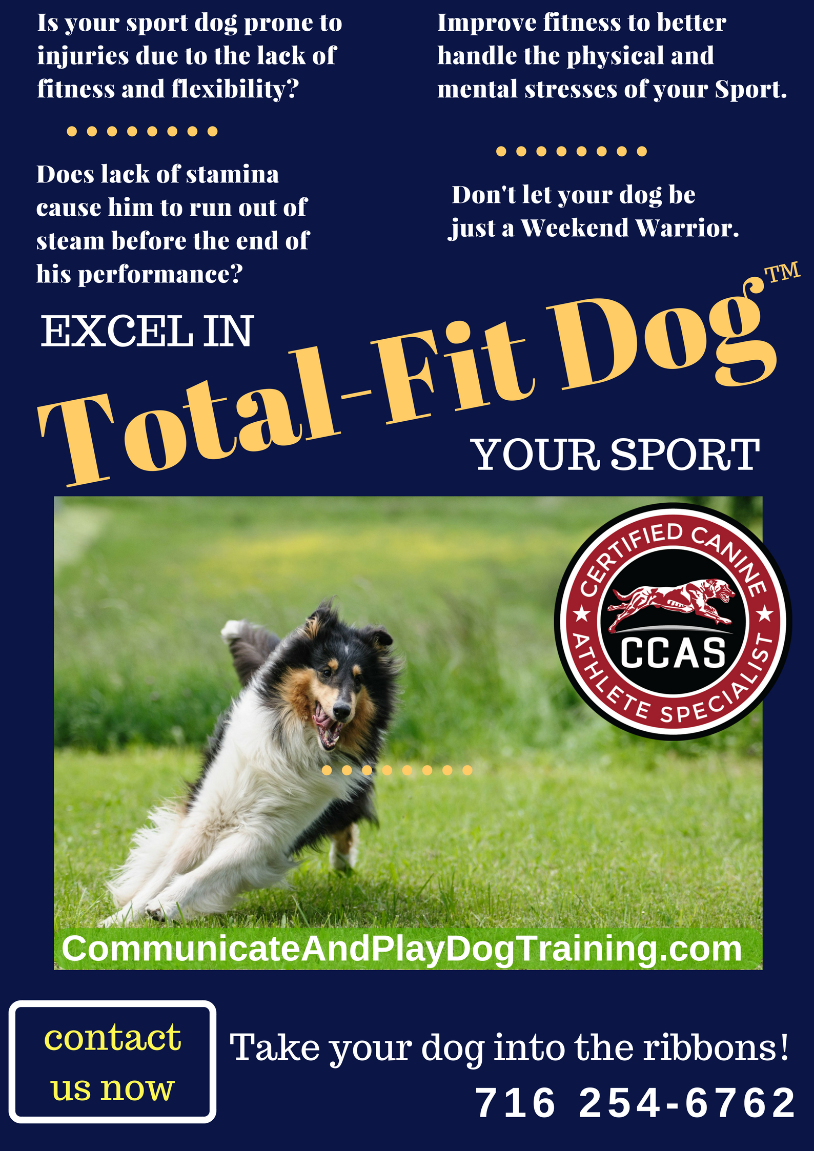 Total-Fit Dog (3).png