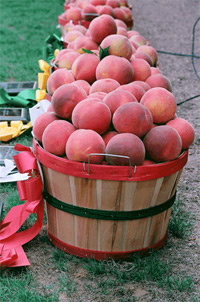 Chilton County Peach Festival