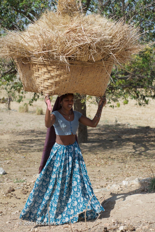 Wheat harvesting in Kotra