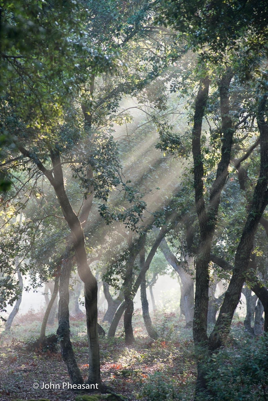 Oak Wood in Puglia
