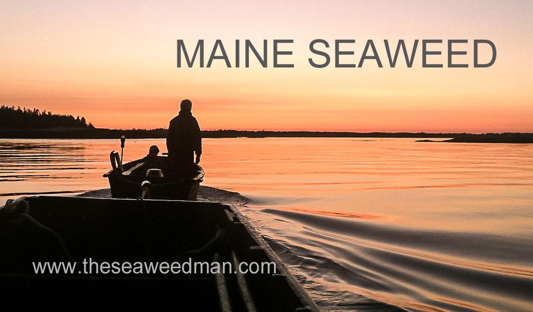 seaweed man logo.jpg