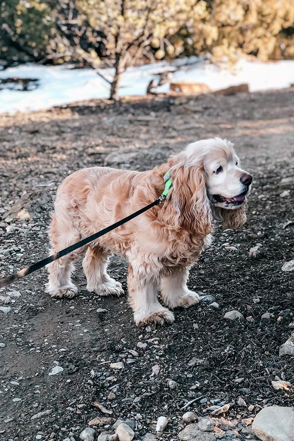 Pet Friendly Trails in Santa Fe, New Mexico
