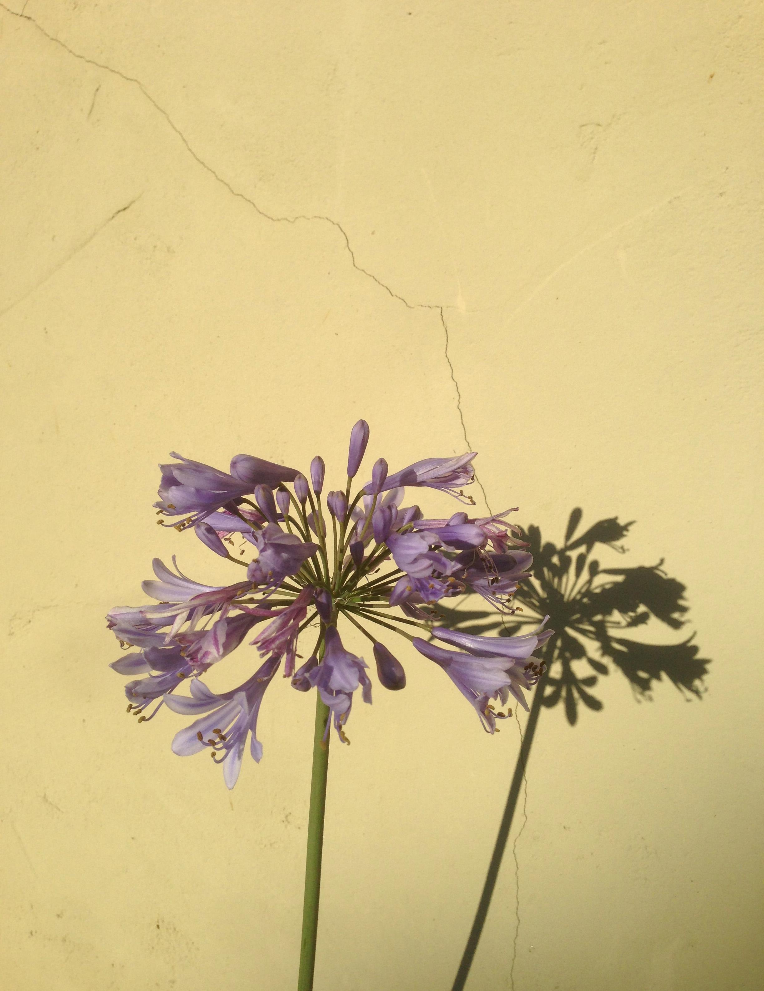 Bloom 2013