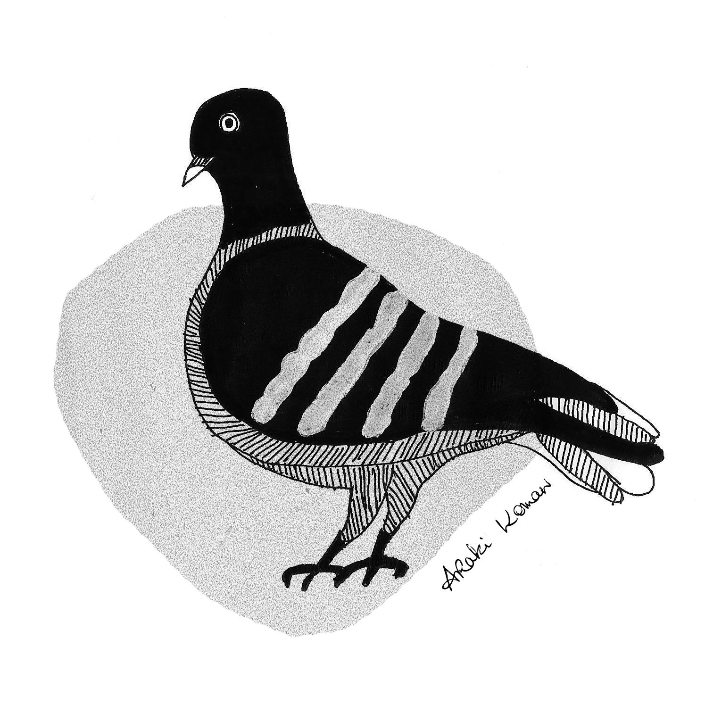 pigeon 2.jpg