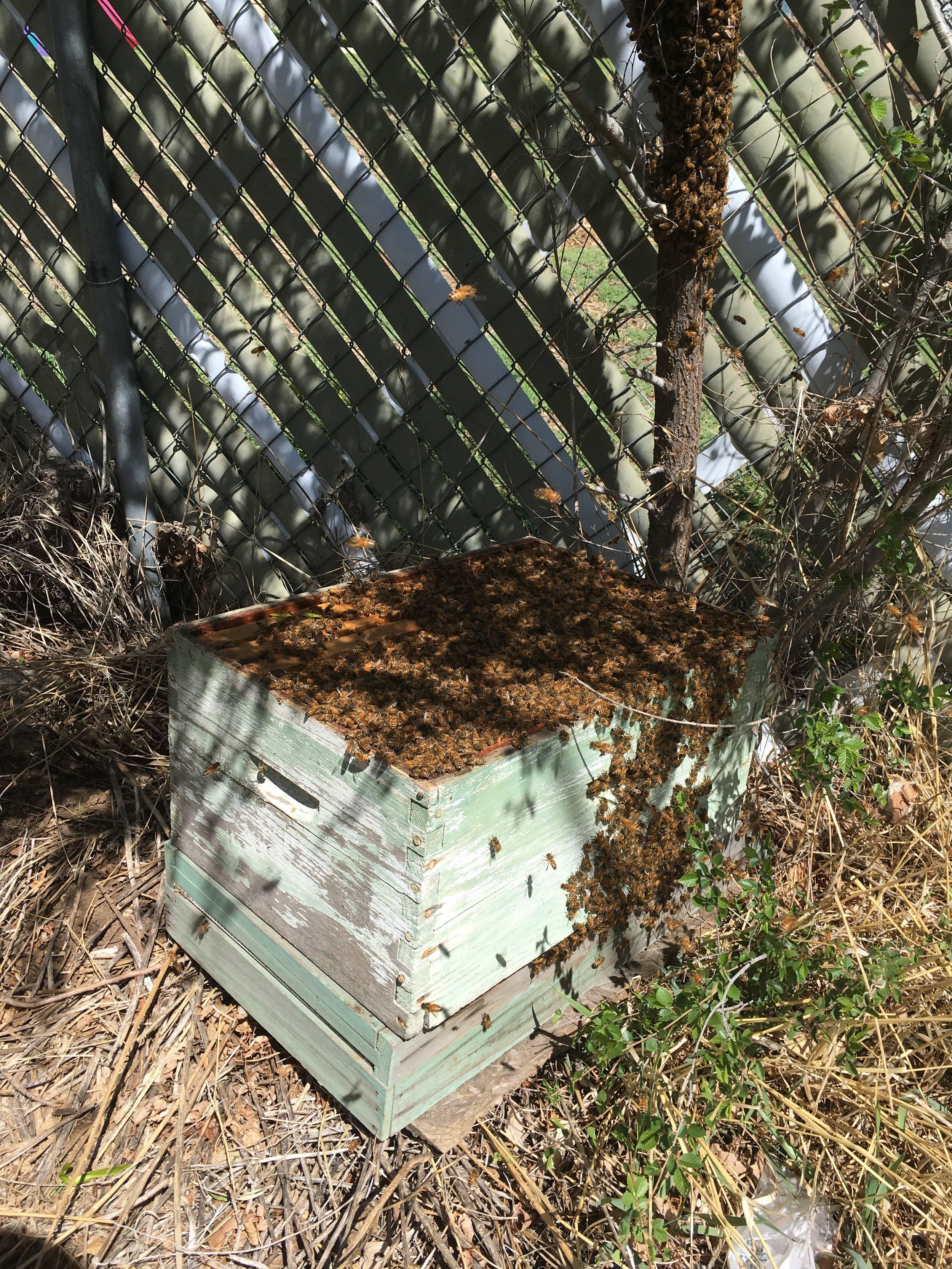 swarm capture.JPG