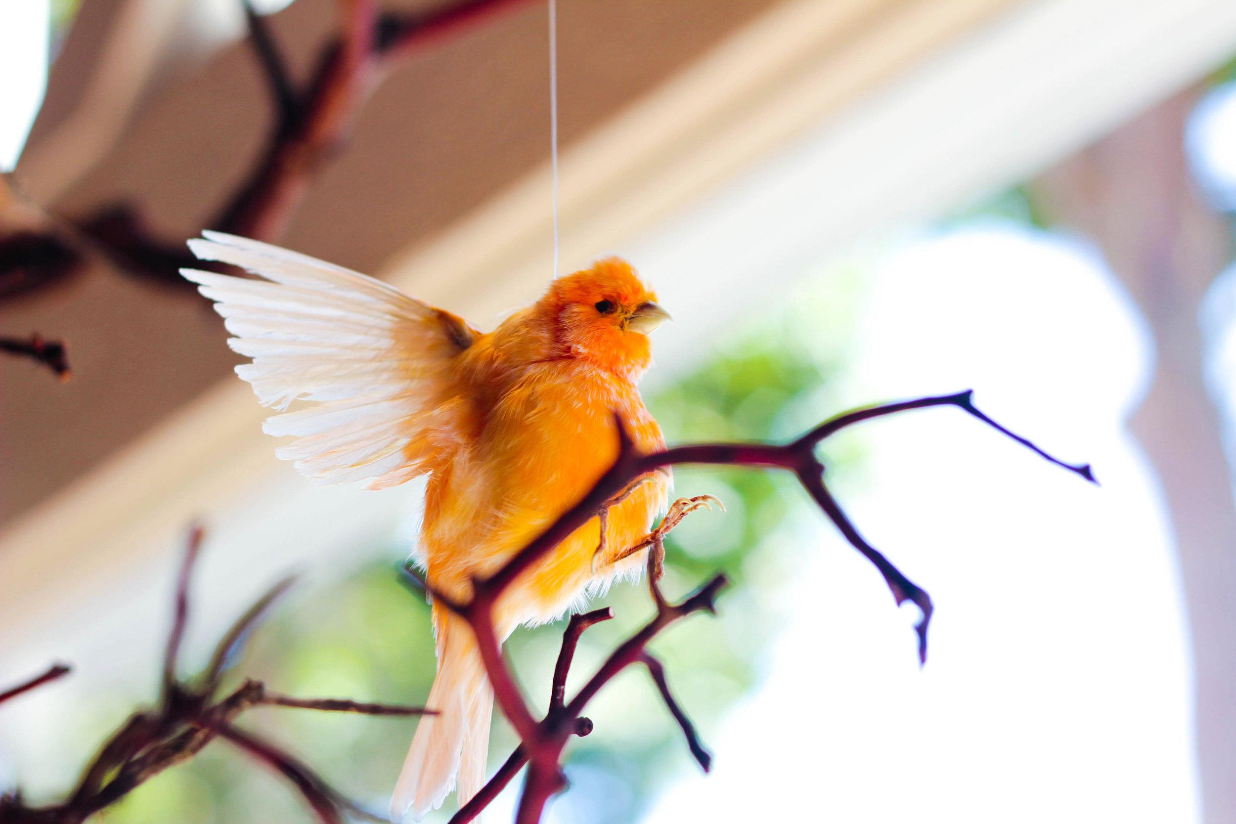 Bird -2.jpg