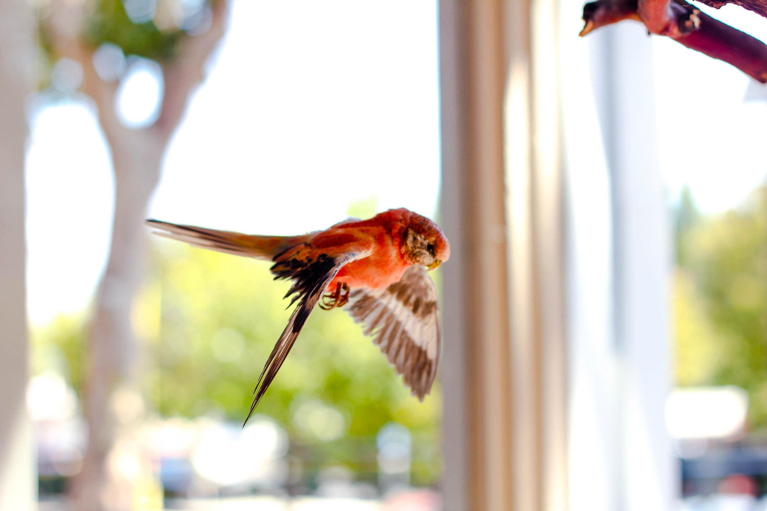 Bird -3.jpg