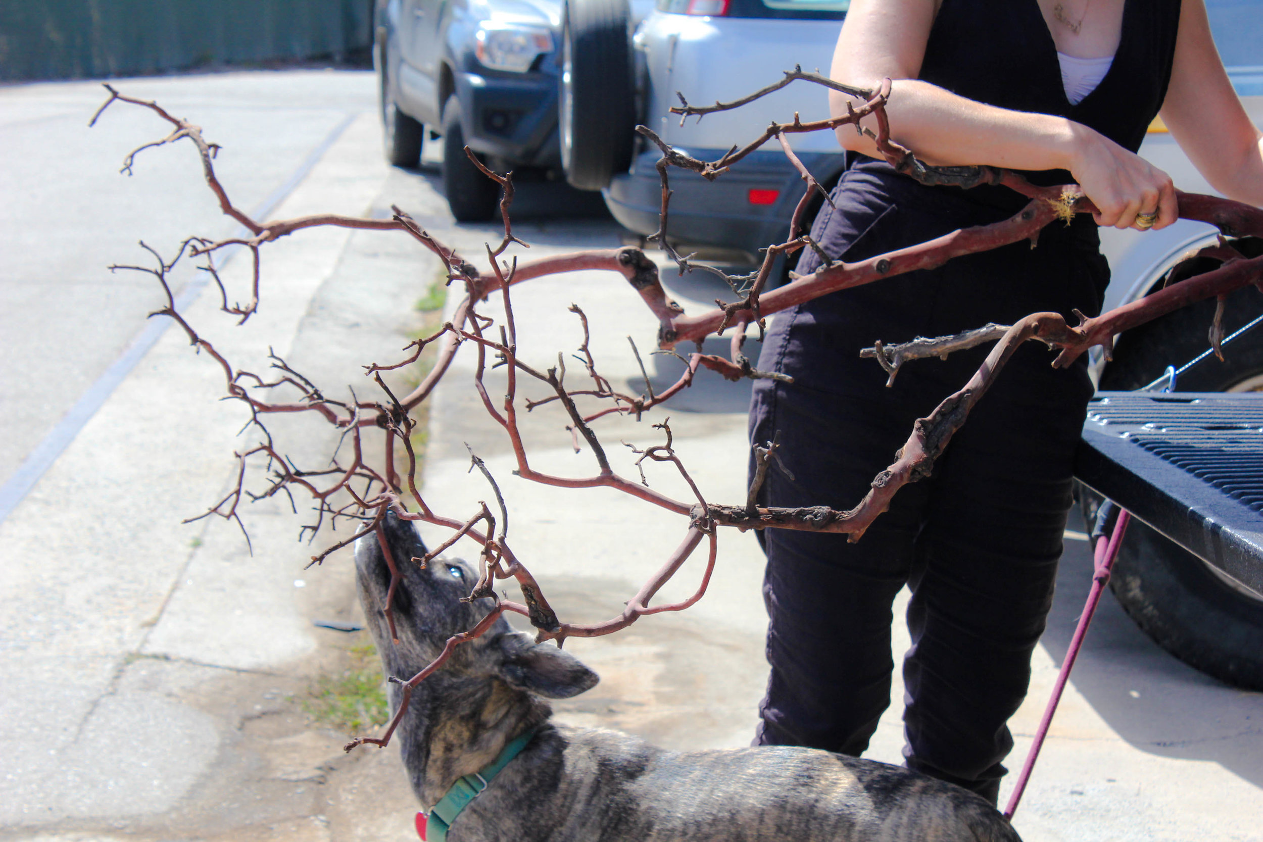 Our assistant Allie, checking out the branch.