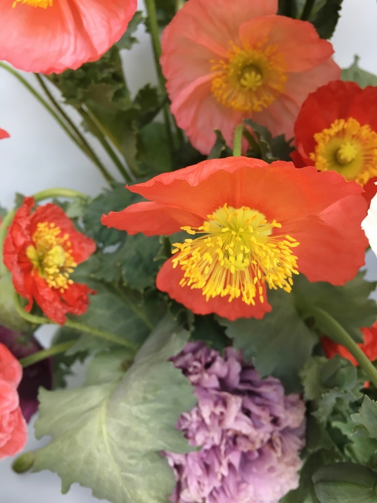 Growing and Arranging with Poppies from Team Flower