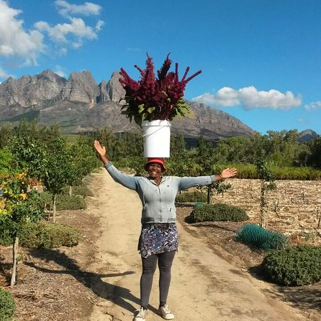 Meena carrying flowers the African Way   Photo Credit: Louise Steenkamp, The Wildbunch Flower Farm, South Africa (featured Botanical Journey local flower farm)