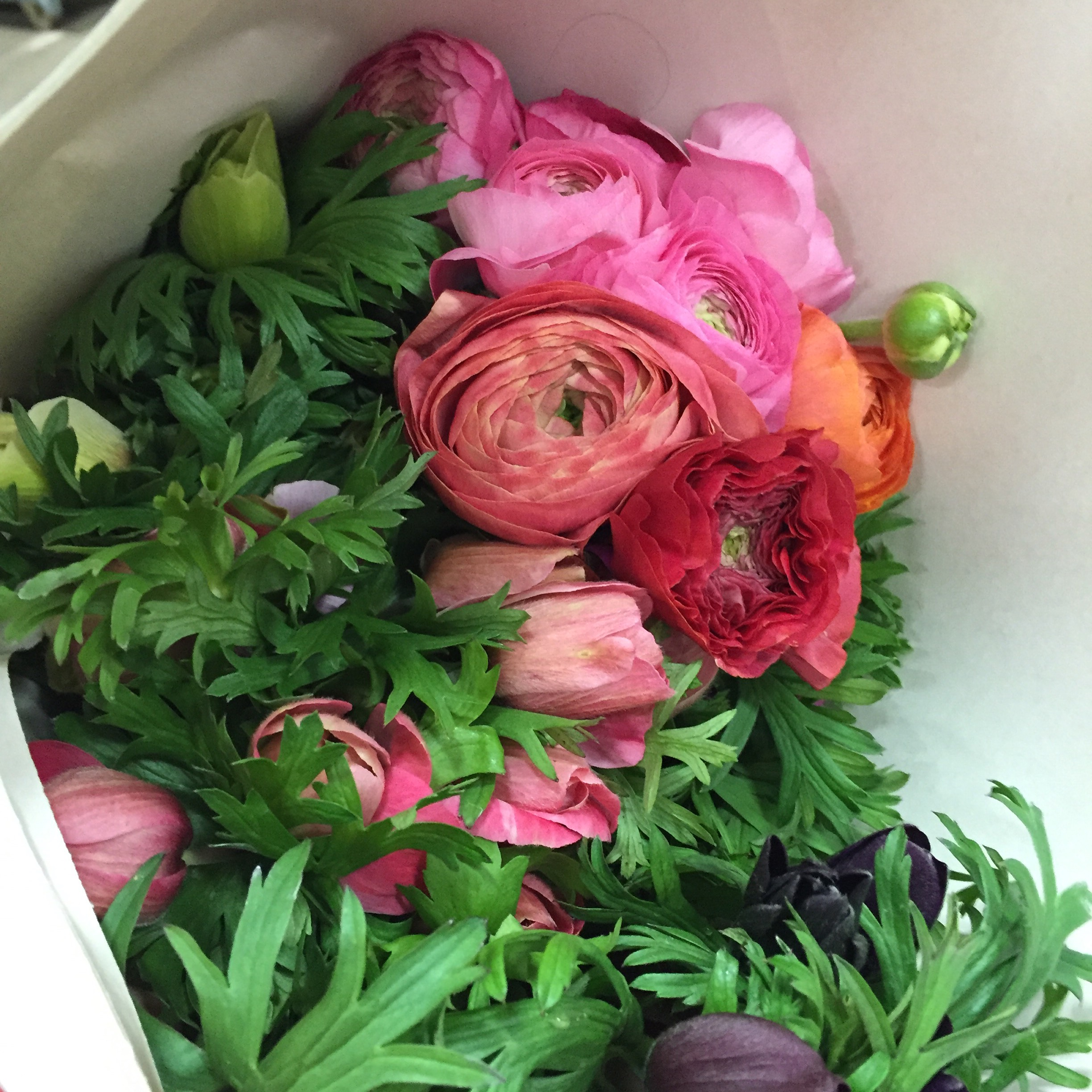 Ranunculus and anemone.JPG