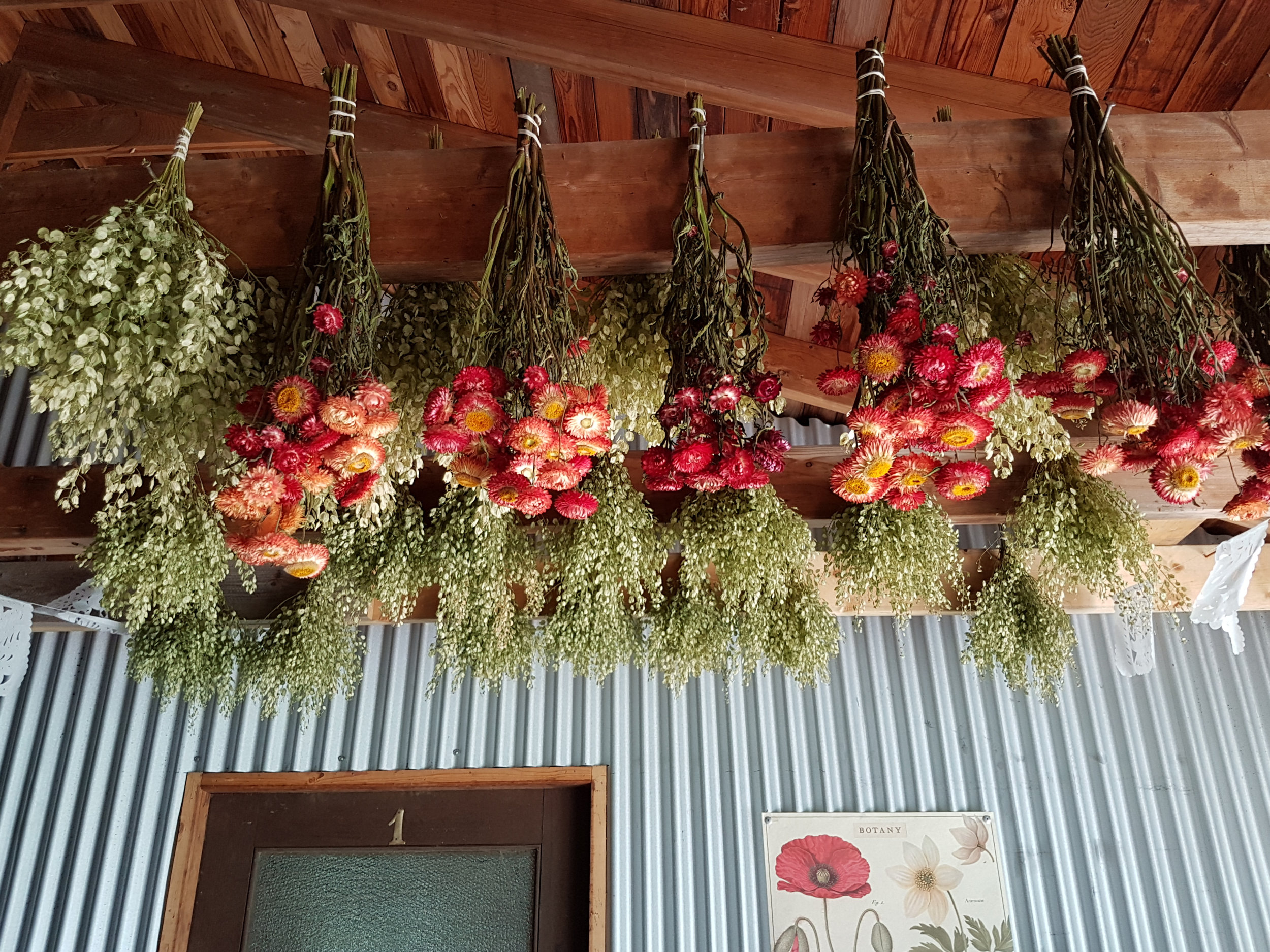 Drying flowers can be as simple as making small bunches and hanging them to dry in a warm, dark space.