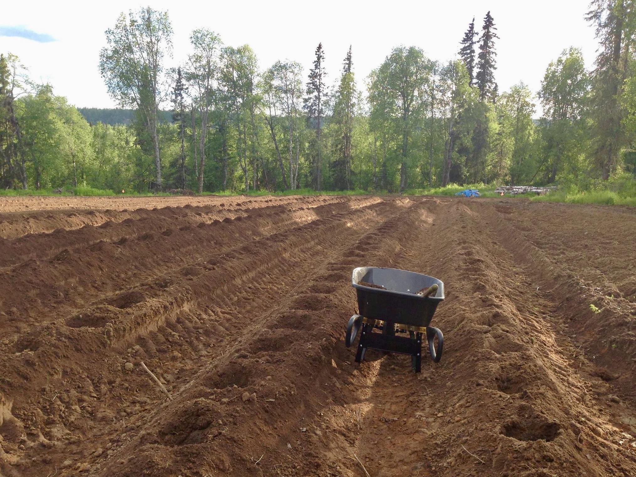 F Soil prep 1.jpg