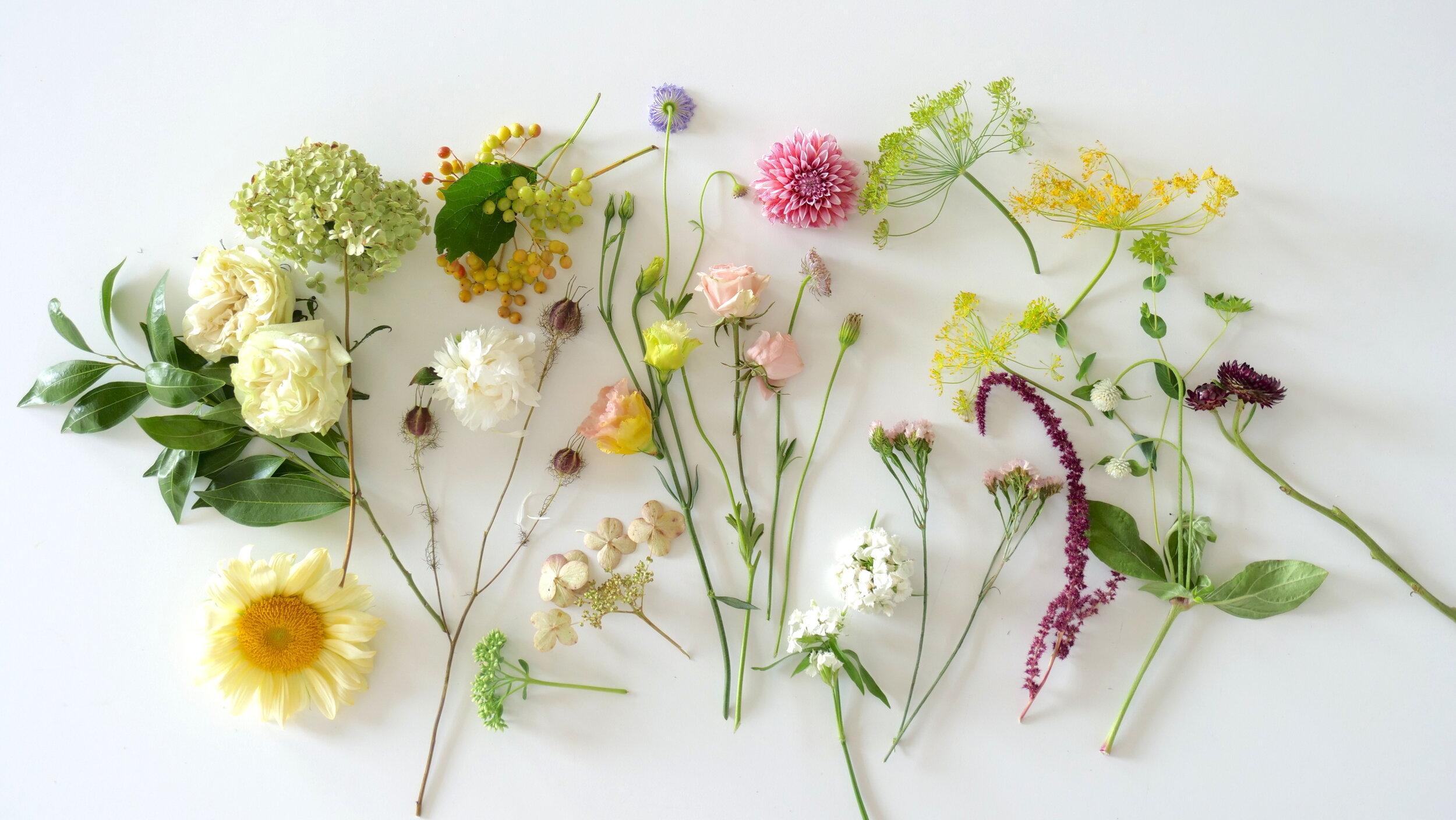 Shiny Flowers Videos