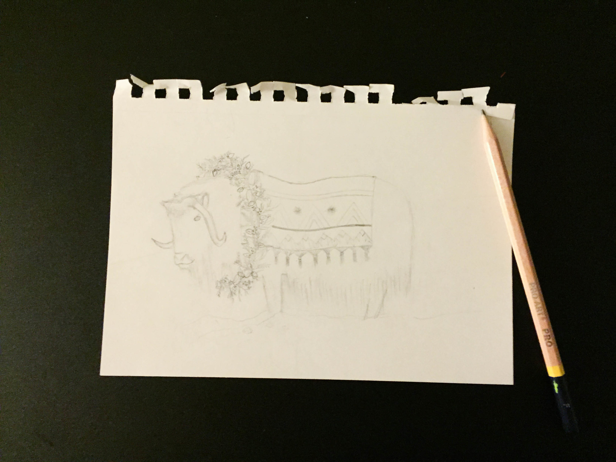 my musk ox drawing!