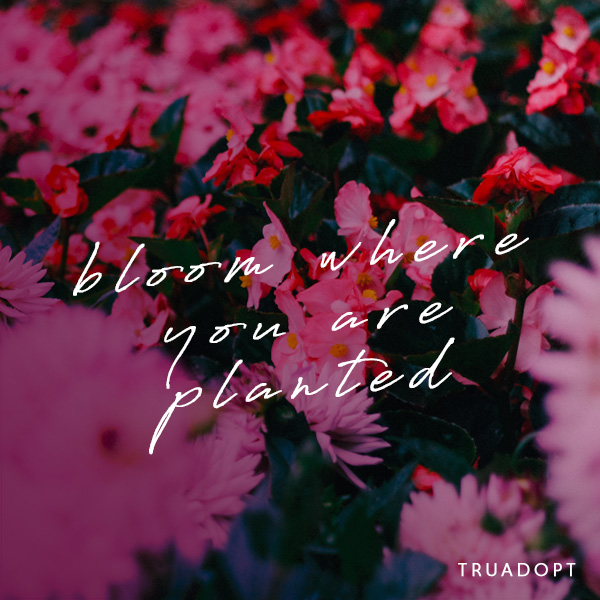 bloom quote-w truadopt text.jpg