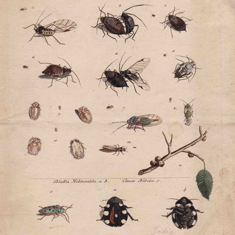 To create a collaged Jardin des Plantes and Ménagerie du Jardin des Plantes upon the page, an original plate from   Genera insectorum Linnaei et Fabricii iconibus illustrata   / a Joanne Jacobo Roemer published by/in Vitoduri Helvetorum.