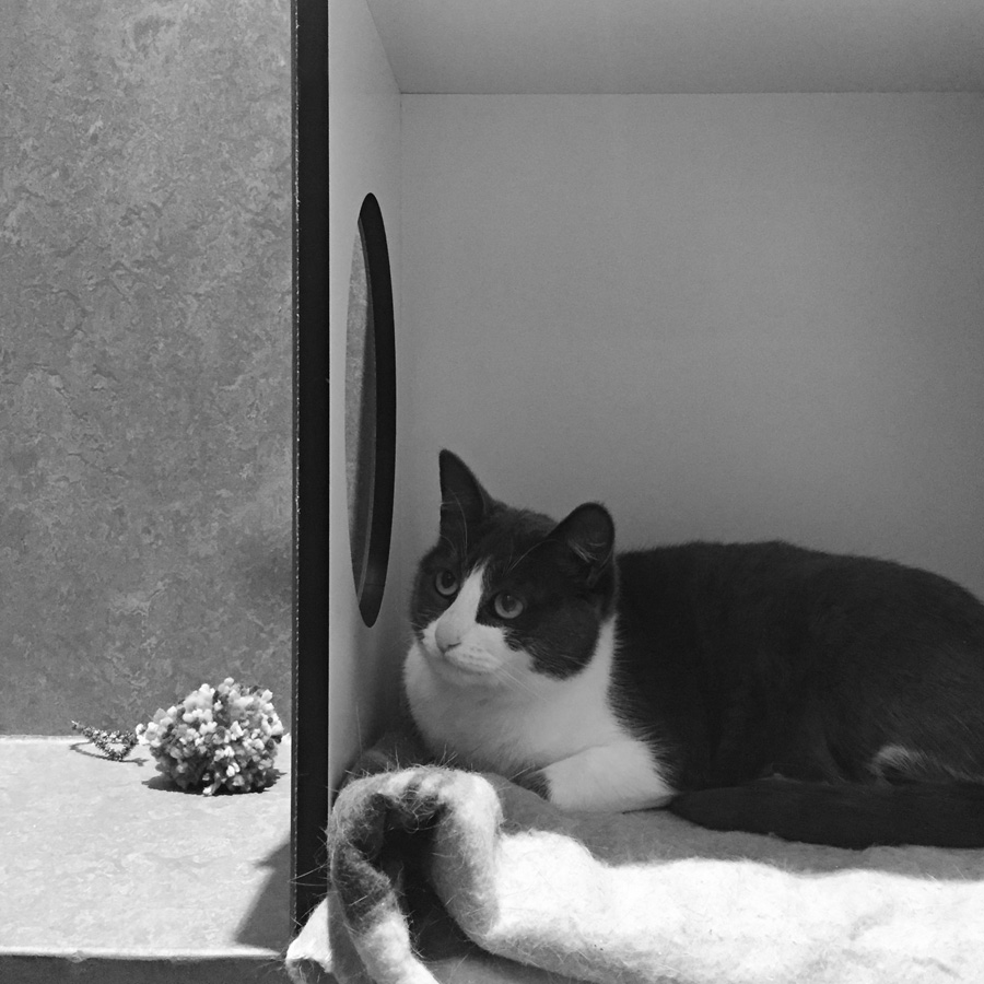 Please meet Ester , a two-year-old grey-and-white domestic short hair, number 859708, at the RSPCA Burwood East shelter, still up for adoption.   RSPCA Victoria adoption
