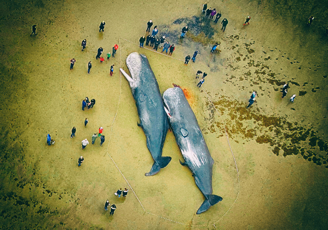 0104240f278beff3bb_whale 1 two_1.jpg