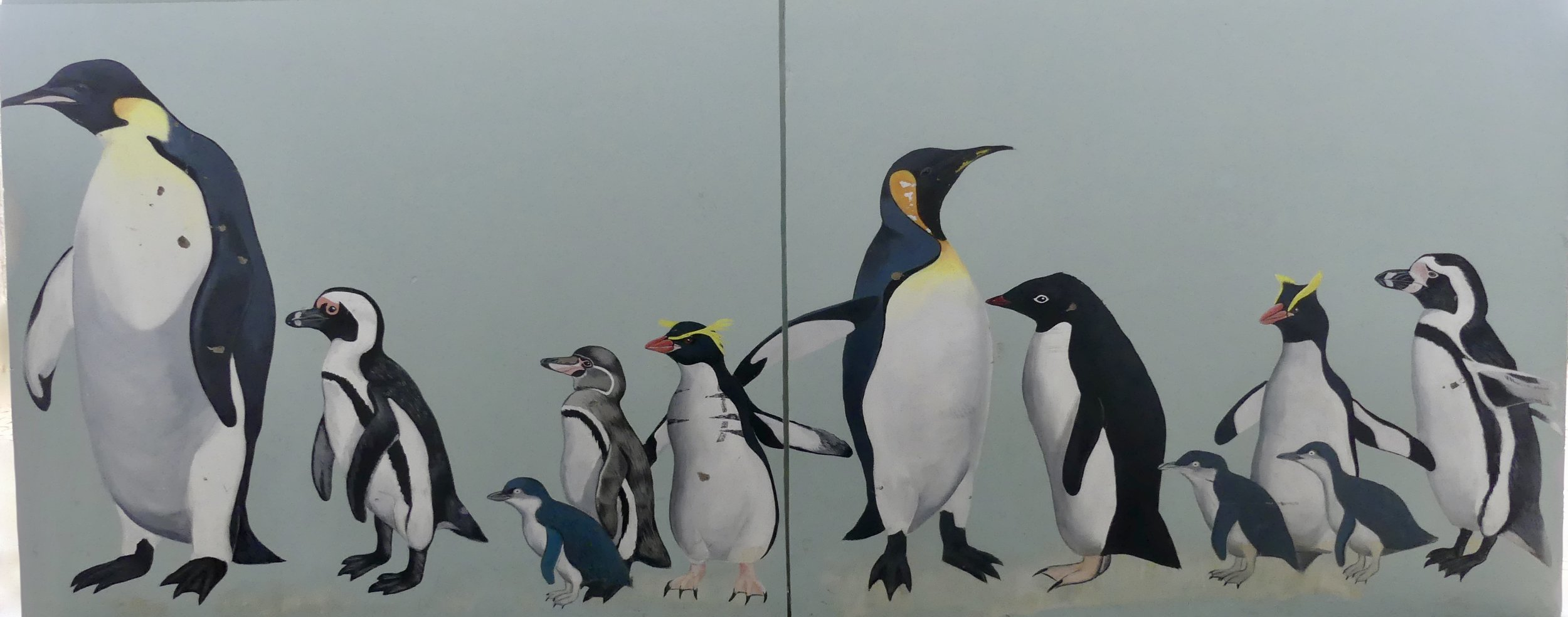 You won't be surprised to learn that Little Penguins are the smallest of the world's penguins