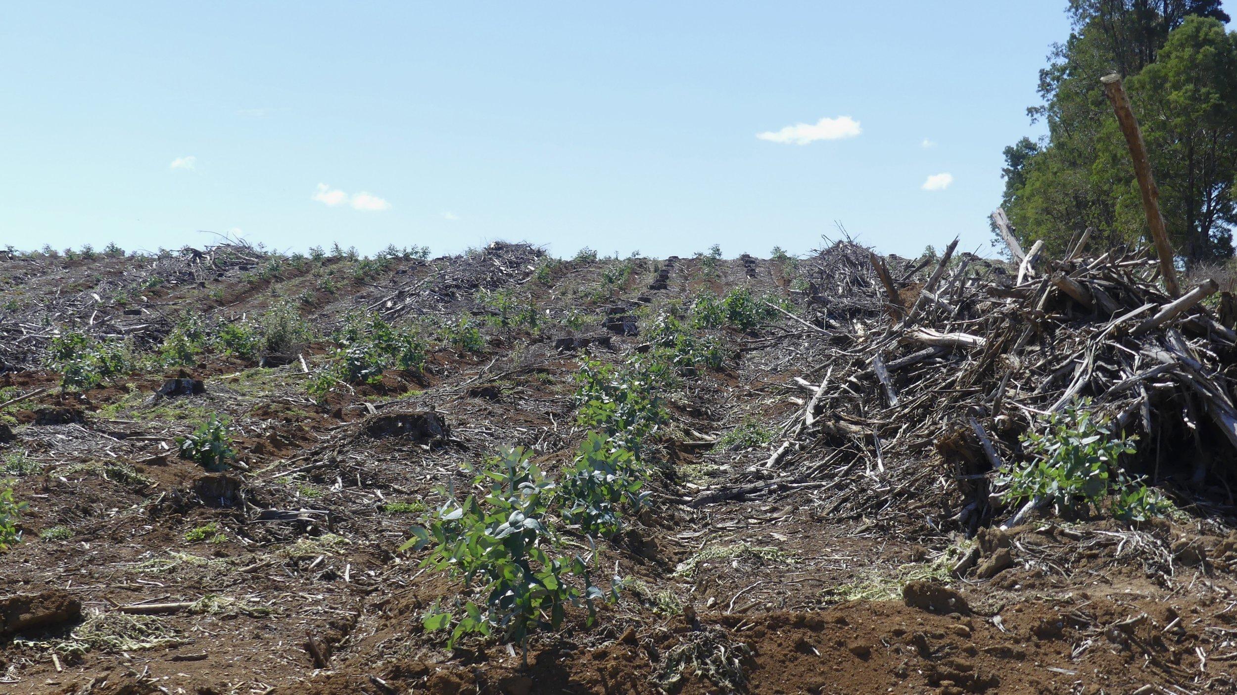 Logging the Tarkine