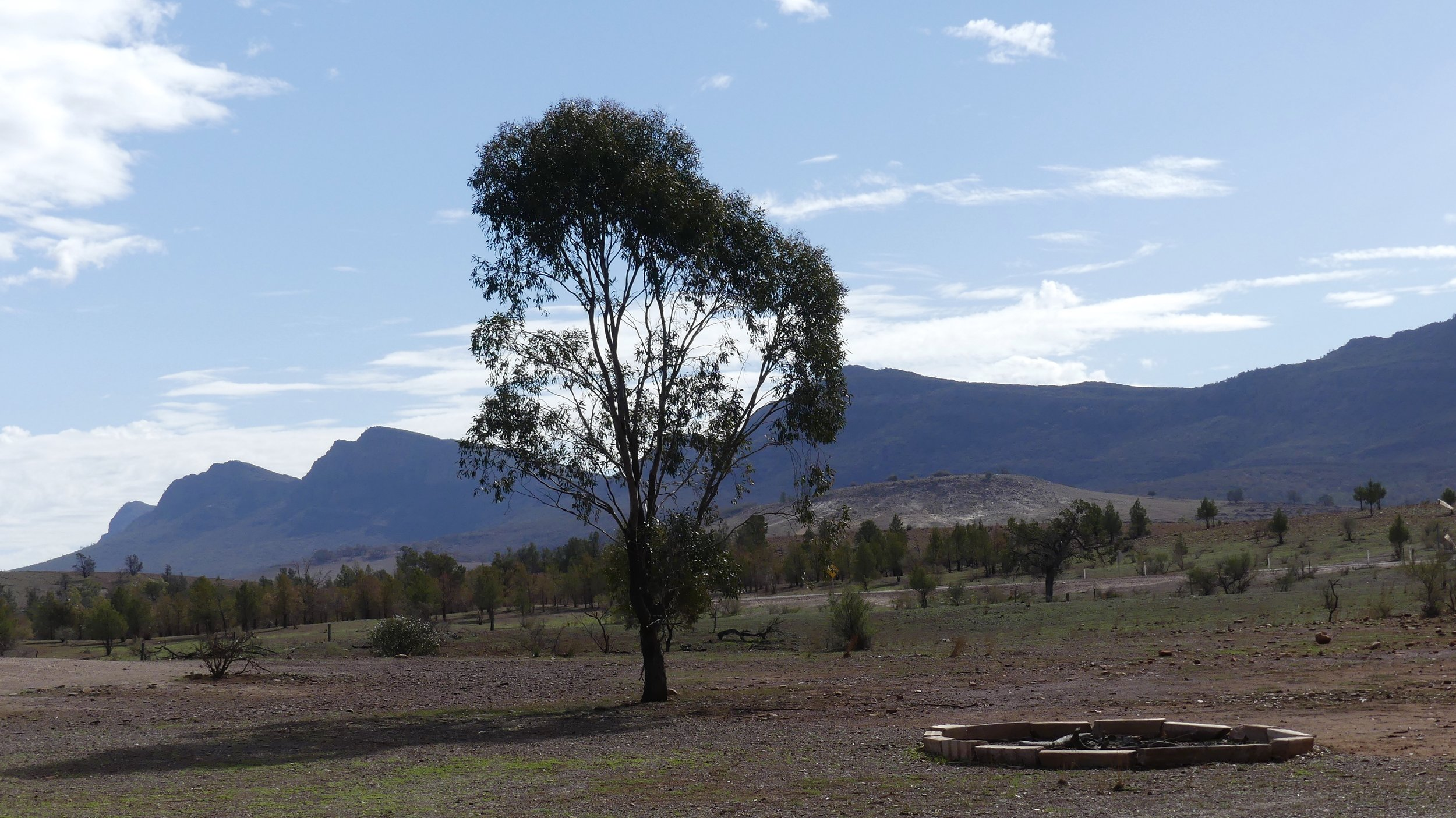 The western flank of Wilpena Pound