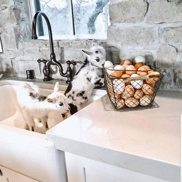 A farmhouse sink is an important part of your rustic renovation.  Inspiration via @countrylivingmag