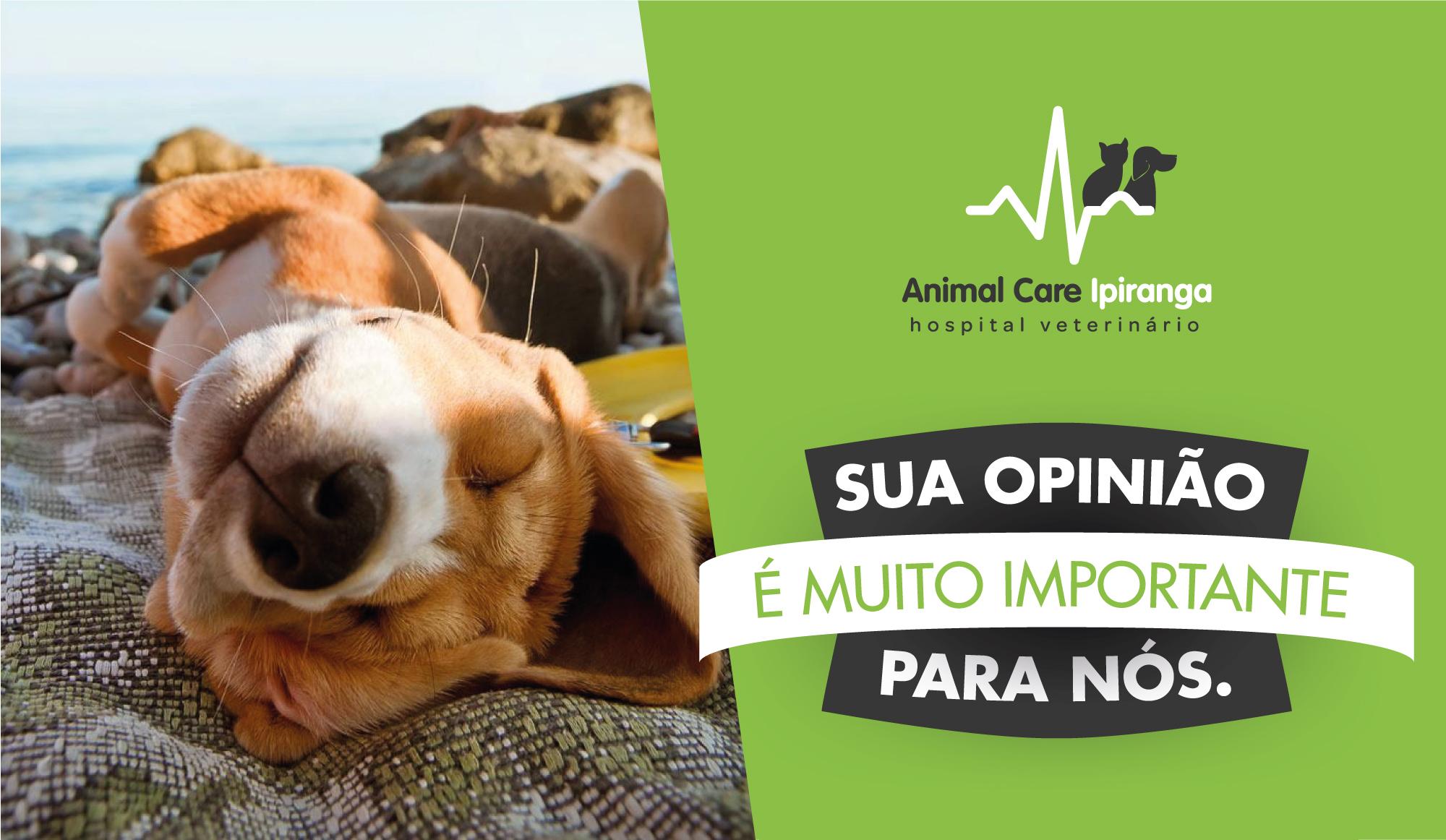 site_pesquisa_de_mercado_animal_care_ipiranga_ly01.jpg