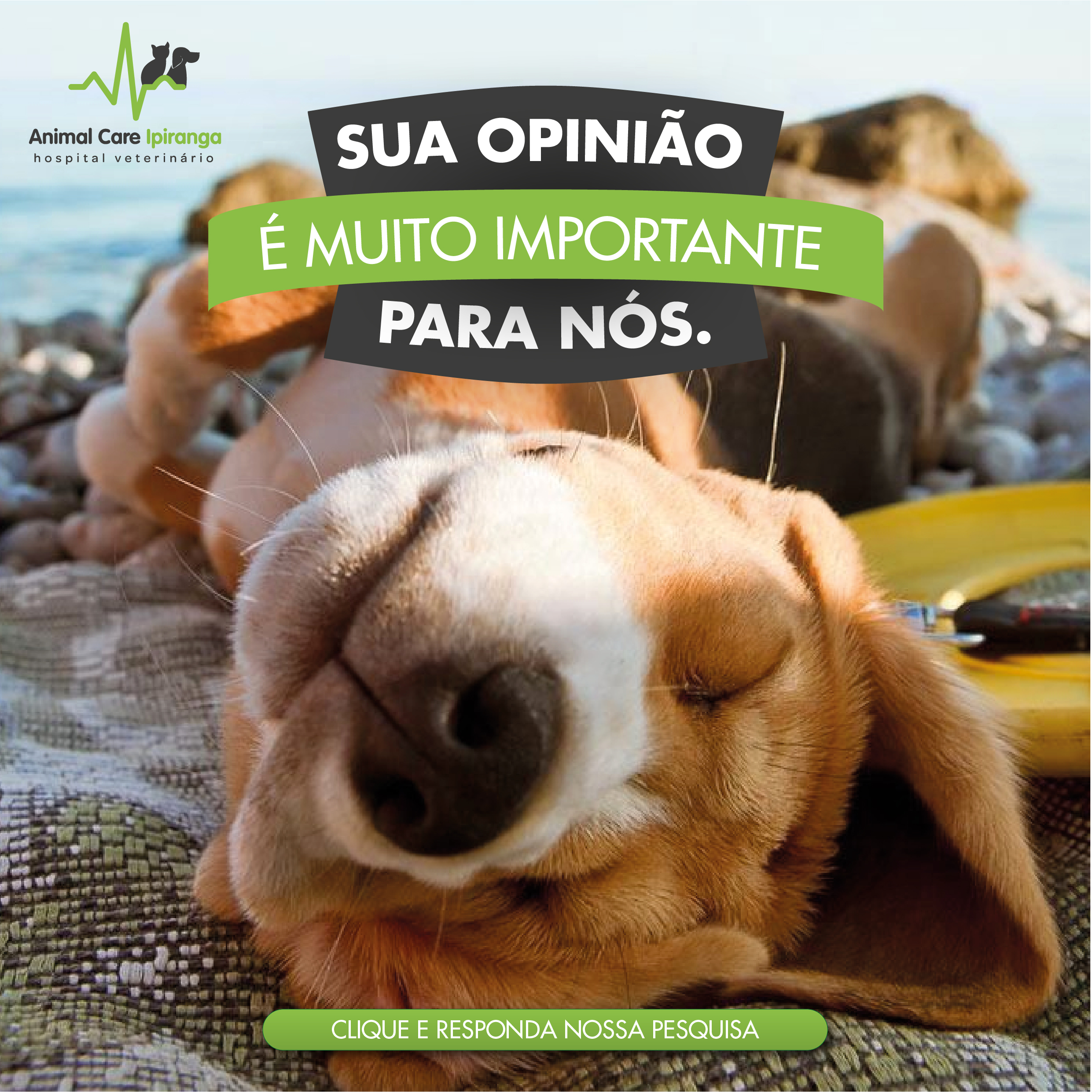 calltoaction_pesquisa_de_mercado_animal_care_ipiranga_ly01-01.jpg