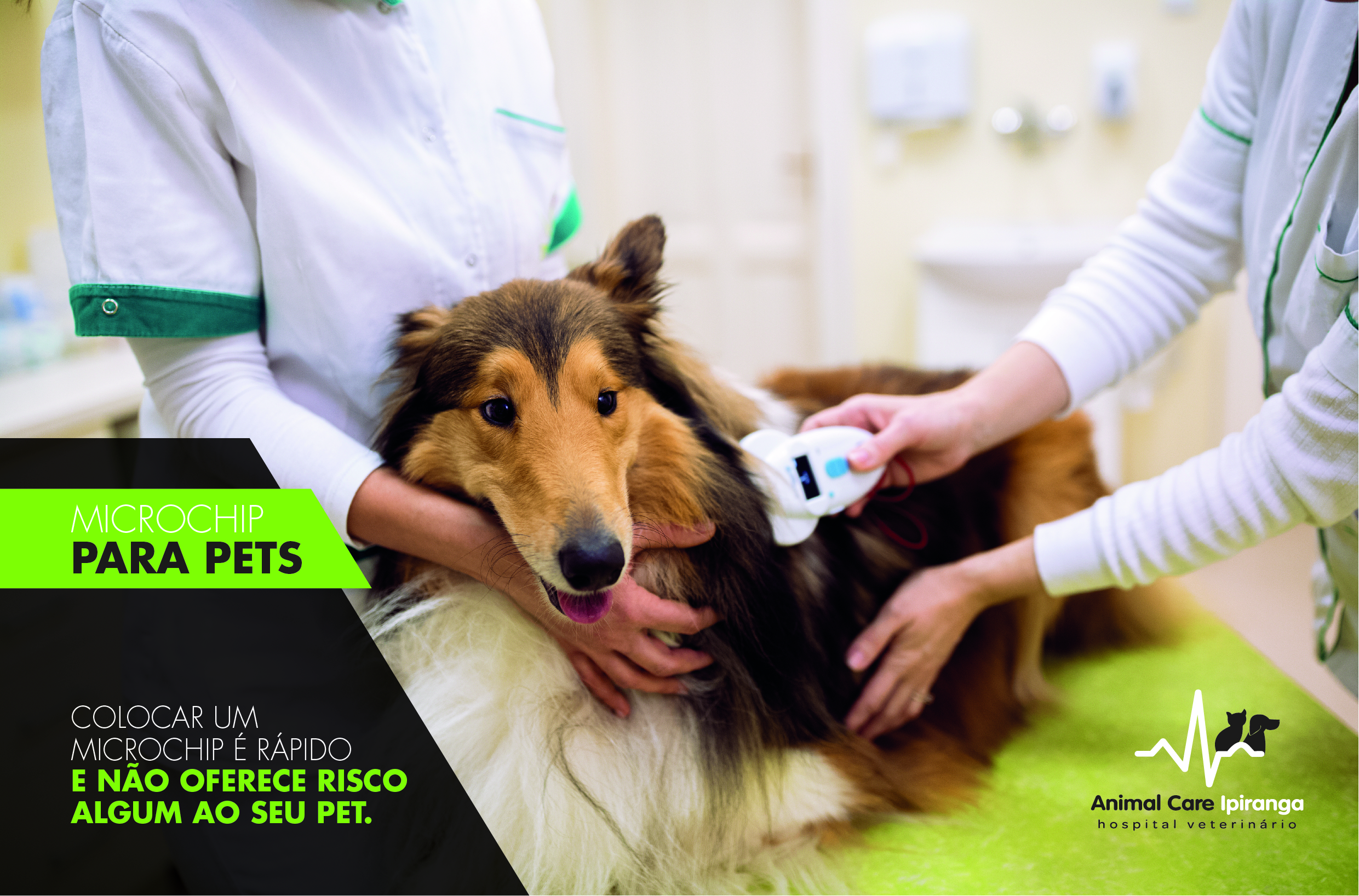 news_chip_para_pets_animal_ly01-01.jpg