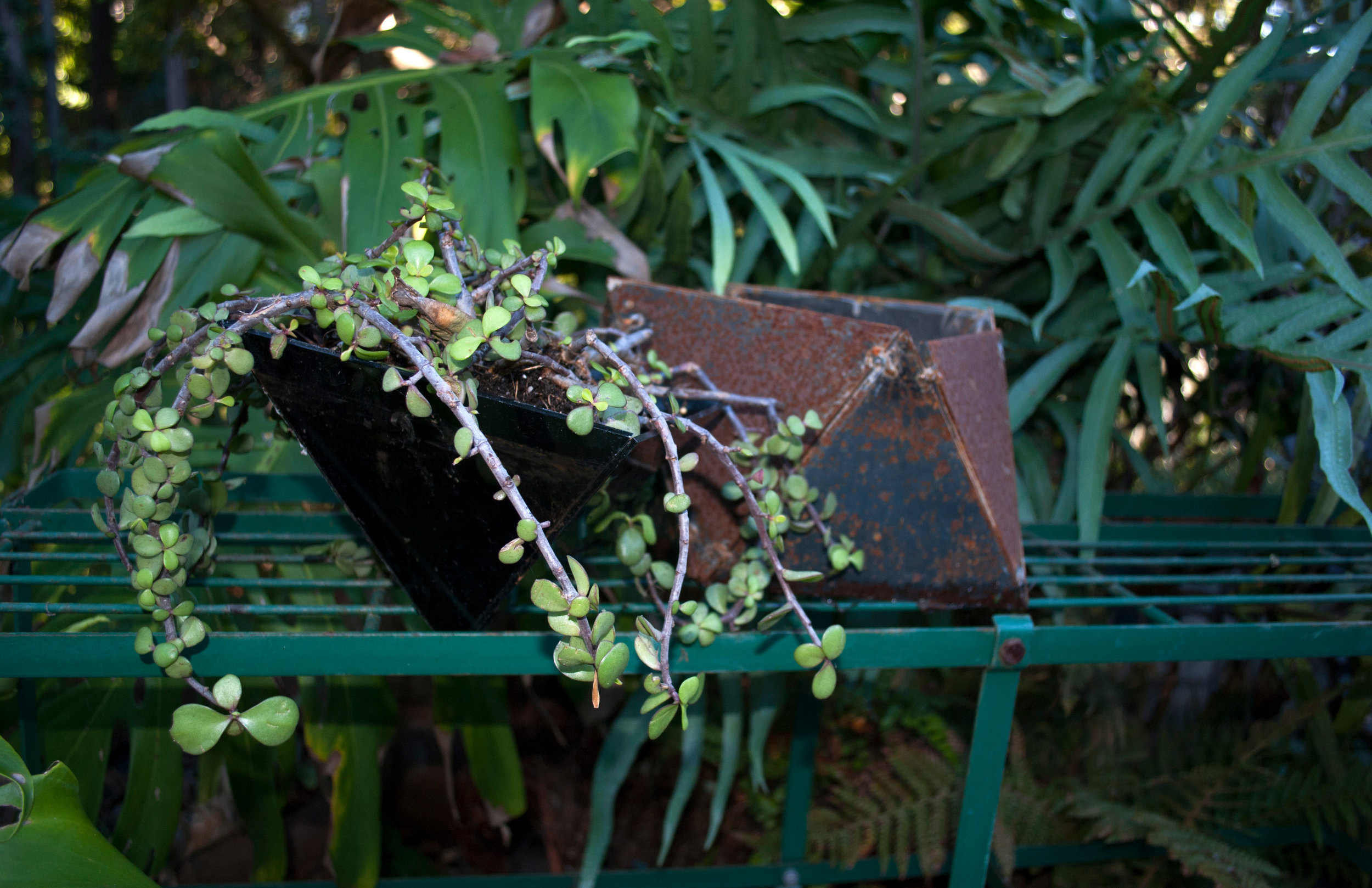 Plantagon5.jpg