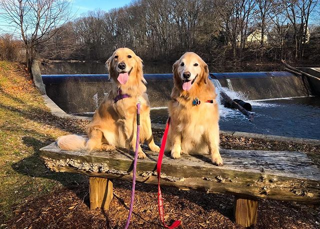 Charlie and Brady enjoying a walk around Clark's Pond this afternoon. Really would have been much nicer with an inch or two of snow on the ground.
