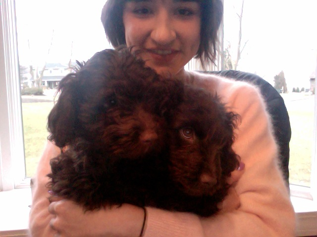 Goddess in Training    Creative team member Arizona with Cocoa + Truffle, all 3 are goddesses in training!