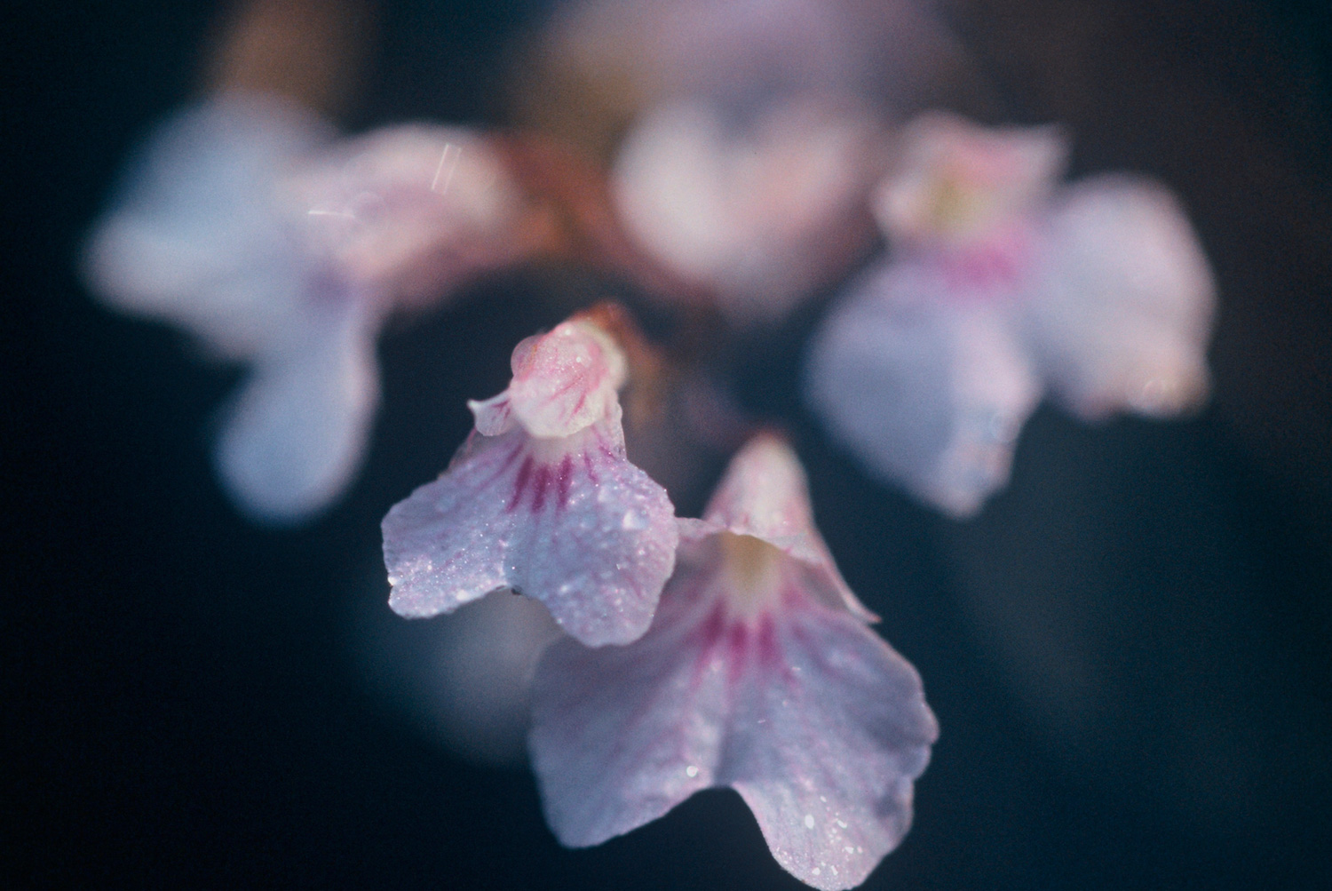Enter the Orchids & Flowers Image Gallery