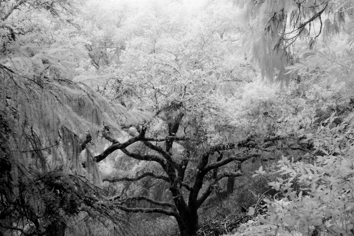Enter the Infrared Image Gallery