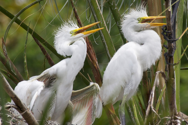 Enter the Birds Image Gallery