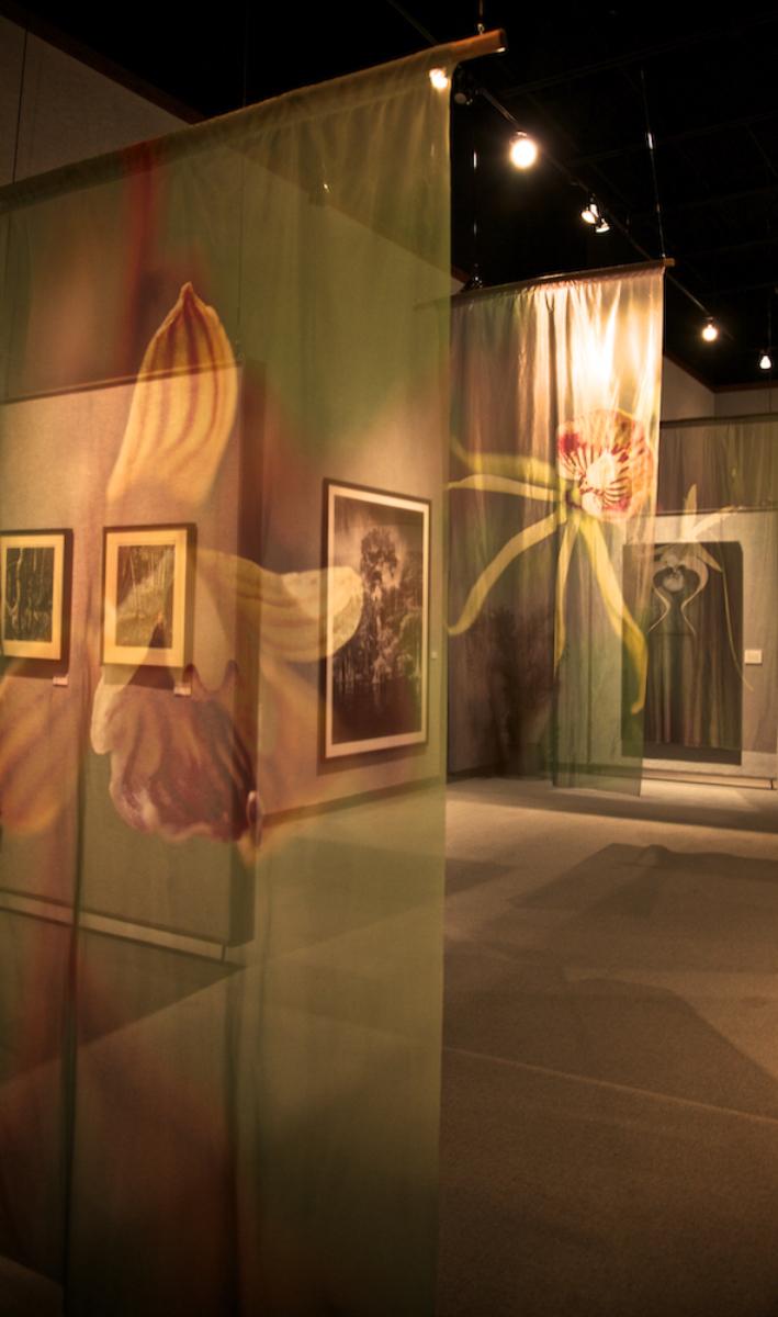 Native Orchid Sheer Panels at MOFAC Exhibition