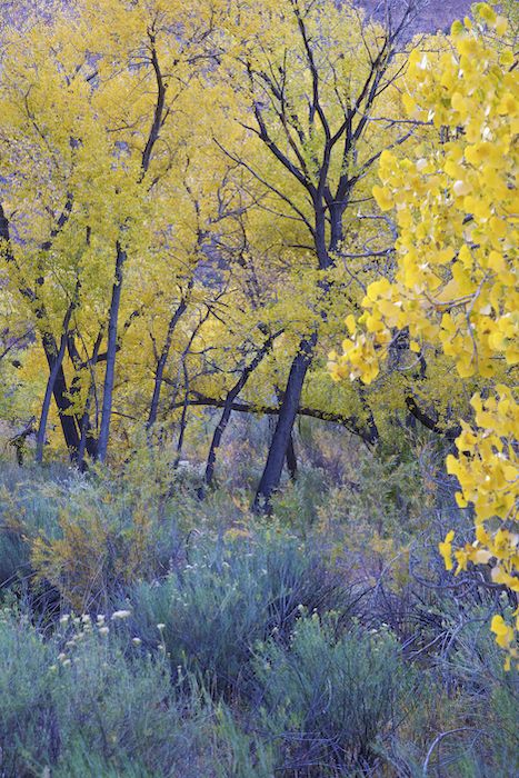 Jemez River bosque in the fall